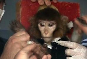 Iran dakwa berjaya hantar monyet ke angkasa