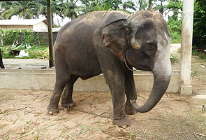 Gajah di zoo di Melaka dipercayai didera