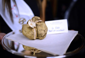 White truffles fetch nearly US$400,000 at auction