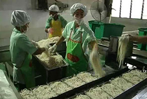 Kilang nafi proses bihun dan laksa berhampiran kandang babi