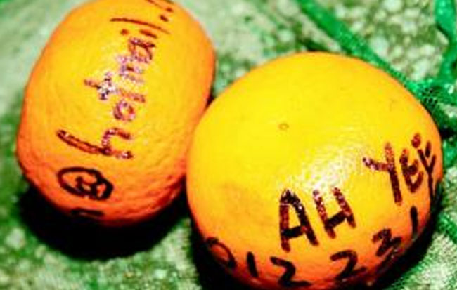 Oranges inscribed with names and telephone numbers