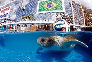 'BIG HEAD' PILIH BRAZIL