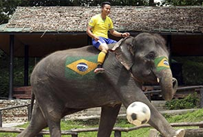 THAILAND'S ELEPHANTS HIT BY WORLD CUP FEVER