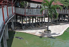 Wanita bunuh diri terjun dalam kolam sarat dengan buaya