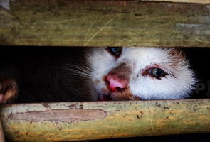 Thousands of live cats from China seized in Vietnam