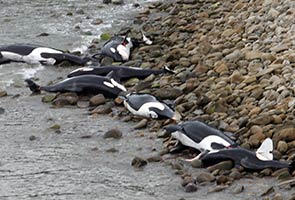 Almost 200 whales stranded on New Zealand beach