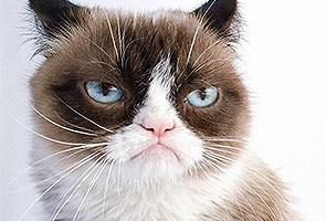 5 Kucing Paling Popular Di Instagram Astro Awani