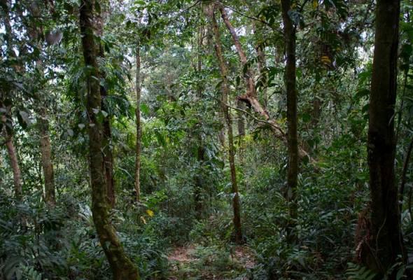 Pembalakan haram, pengubahan hutan ancam santuari hidupan liar Kinabatangan