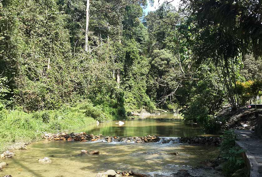 Antara kawasan hijau yang masih kaya dengan khazanah alam flora dan fauna dapat ditemui di Taman Rimba Ampang