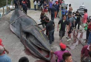 Ujian histopatologi ikan paus siap dua hingga tiga minggu