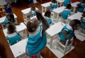 Monkeys go to school in China