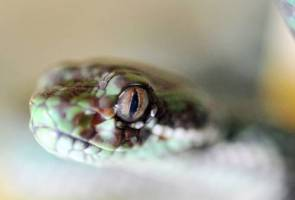 Semua yang anda perlu tahu tentang patukan ular