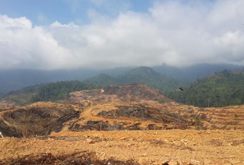 Kawasan tadahan air di kaki Gunung Dulang diteroka untuk tujuan perladangan kelapa sawit. - Gambar Astro AWANI/Tan Su Lin