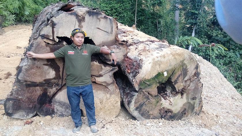 Image result for foto Rumah orang asli gua musang dimusnahkan