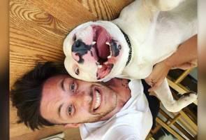 Gara-gara gambar viral, Diggy si anjing pitbull diancam bunuh