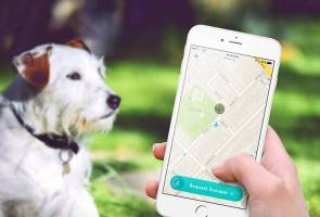 So it has come to this: An app that finds someone to clear up after your dog