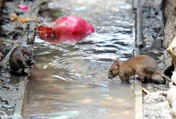 Kes jangkitan virus Hepatitis E tikus kepada manusia pertama di dunia dikesan