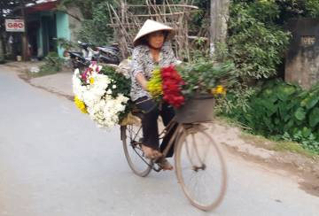 The flower growers of Nam Dinh