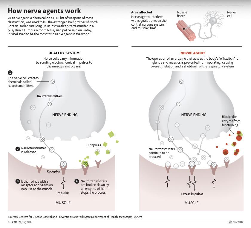 Cara agen saraf VX berfungsi