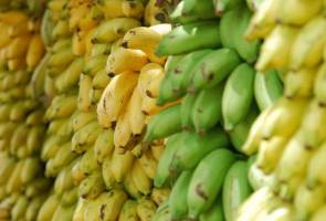 Bullets and bananas: The price farmers pay for your Cavendish bananas