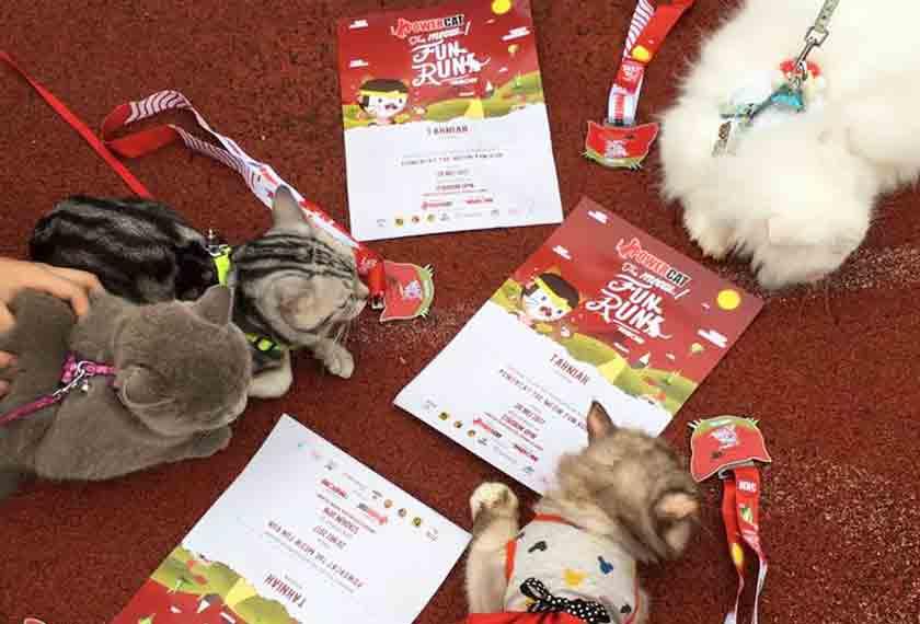 Antara kucing-kucing yang berjaya menamatkan larian, bersama medal dan sijil masing-masing.
