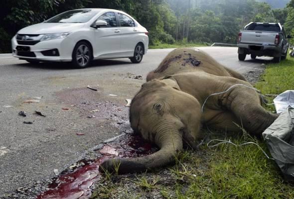 Segerakan bina santuari gajah di Hulu Perak - Ahmad Faizal