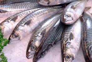 Malaysia to produce three million tonnes of fish by 2020