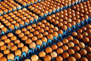 10 perkara yang anda perlu tahu tentang skandal telur tercemar