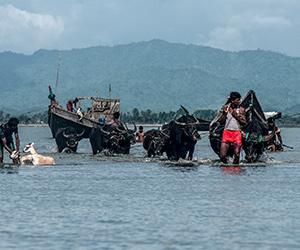 Rohingya di Bangladesh
