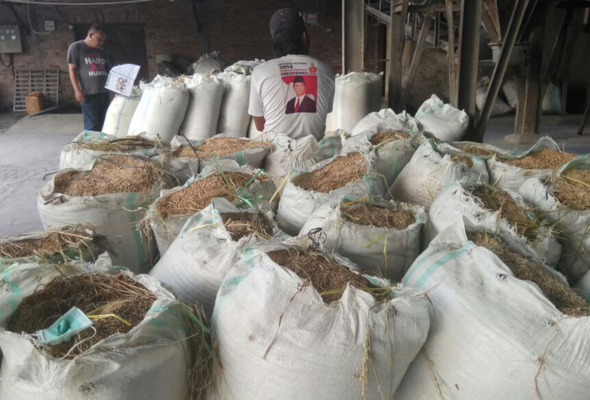 The paddy is all around the mill, waiting to be processed. - Karim Raslan Photo