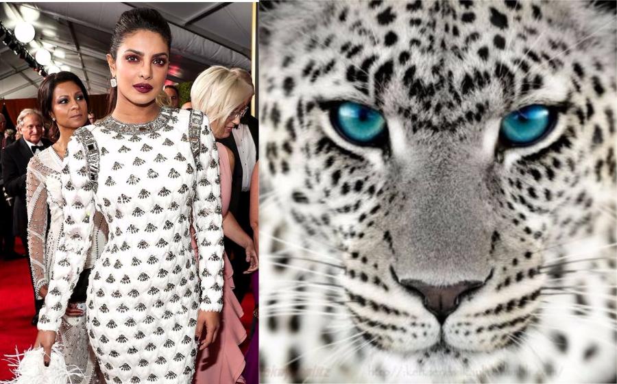 Seperti harimau bintang salji! Peminat troll Priyanka Chopra