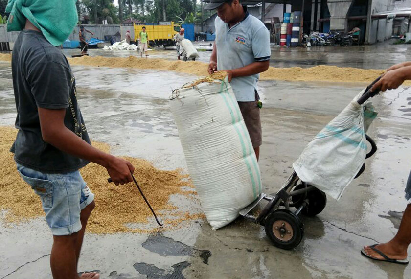 While they have a drying machine, the millers also dry the paddy out in the sun. - Karim Raslan Photo