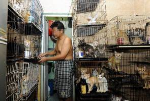 Rescued cats handed over to new families - Sahabat Kucing Jalanan