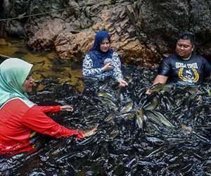 Santuari Ikan Kelah, Tasik Kenyir