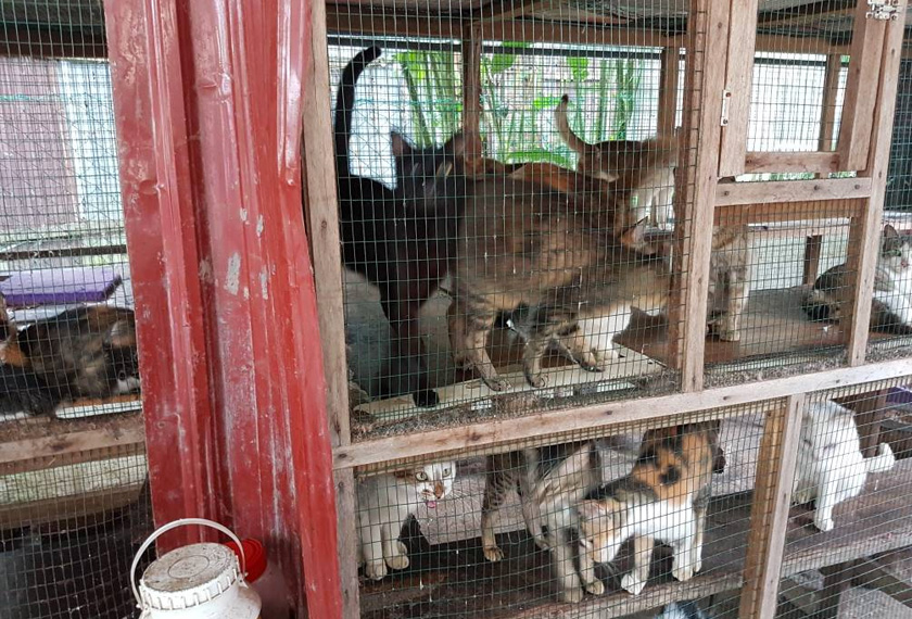 [PUSH PAGI] Hanya 4 peratus rakyat Malaysia lindungi kenderaan daripada banjir 160081 [PUSH PAGI] Takut guruh dan kilat? Seperti manusia, kucing juga alami trauma 160082