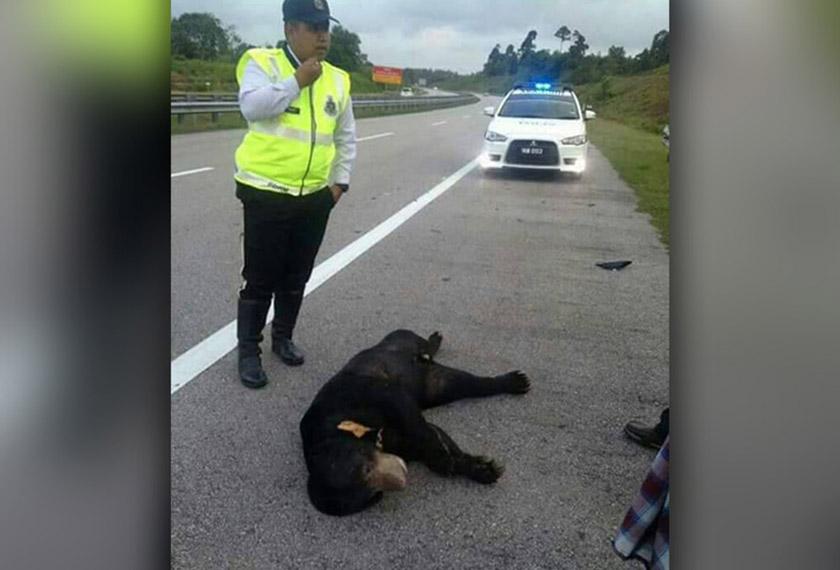 Kejadian itu berlaku kira-kira 6.50 petang itu di KM347.5 berhampiran susur keluar Plaza Tol Kuala Dungun. - Facebook/Terengganu Times