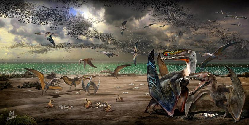 Semua fosil Hamipterus jantan dan betina dewasa itu dijumpai bersama fosil anak-anak dan telur di tapak ekskavasi Wilayah Autonomi Uighur Xinjiang.