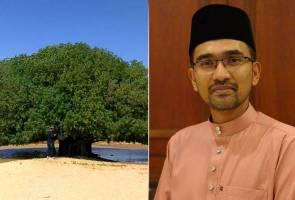 Pokok Sahabi tiada kena mengena dengan kisah Rasulullah