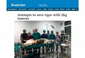 Harimau teruskan hidup dengan barah walau tumor 2kg berjaya dibuang