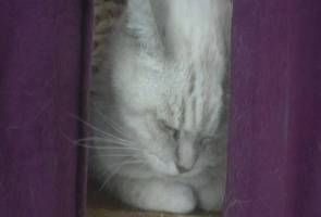 Skim pelaburan kucing tumpas