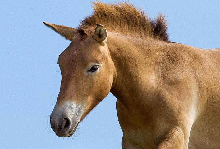 Anak saksi yang juga seorang veterinar, mengesyaki kuda berkenaan sudah 'dinodai', lalu mengambil beberapa sampel DNA di badan kuda berkenaan. - Gambar hiasan