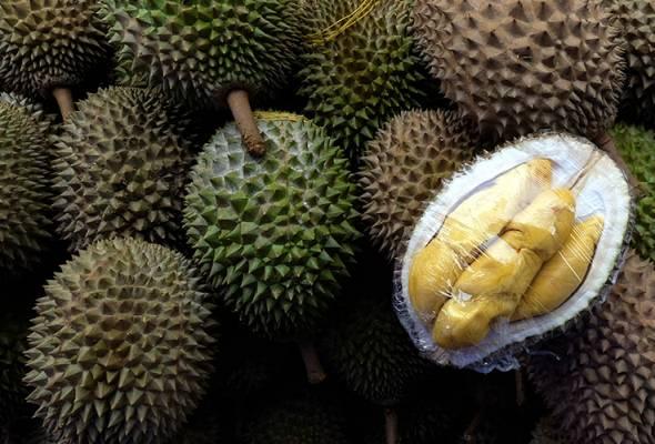 Tiada lambakan durian di Perak