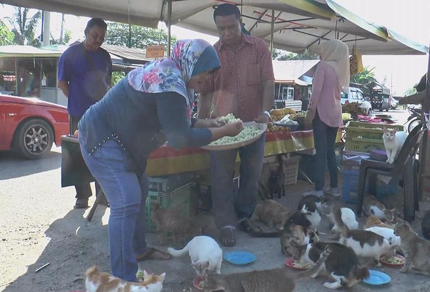 Rosli dan Mariam bercita-cita untuk membuka pusat jagaan kucing suatu hari nanti. - Astro AWANI