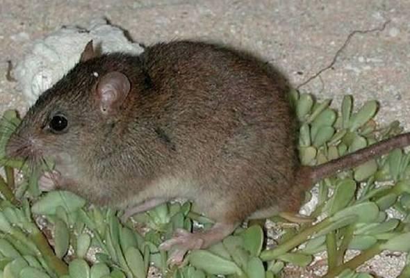 Manusia punca habitat mamalia pupus di Australia