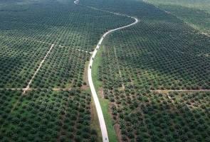 India kekal sebagai destinasi eksport utama minyak sawit 2