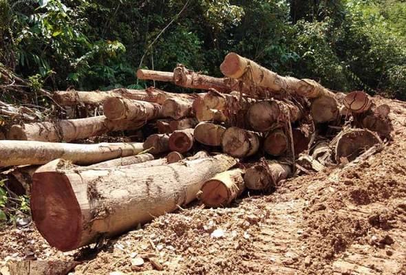 Timbus kayu balak dengan tanah untuk elak dikesan