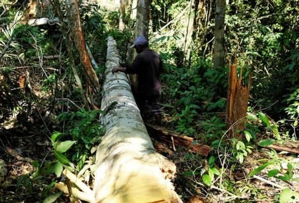 Garis panduan pengurusan hutan akan dikeluarkan