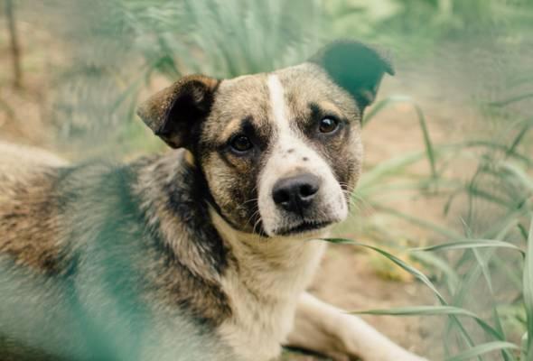 Rabies: Larangan pergerakan anjing di sempadan Sarawak-Kalimantan