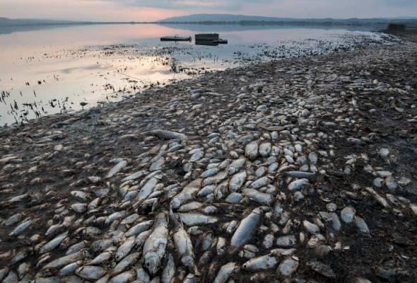 Puluhan ribu ikan mati akibat kemarau di Greece