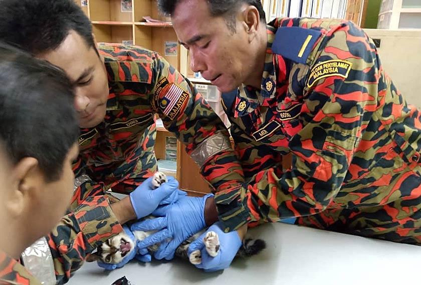 Anggota bomba menggunakan peralatan khas bagi mengeluarkan mata kail yang tersangkut di tapak kaki kucing. Foto JBPM Perak